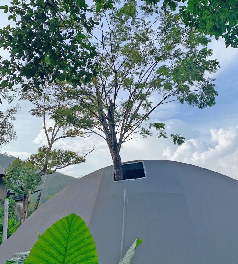 Keemala Tree